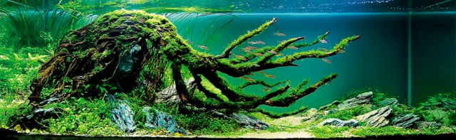 phông nền hồ cá rồng, phong nen ho ca canh 16