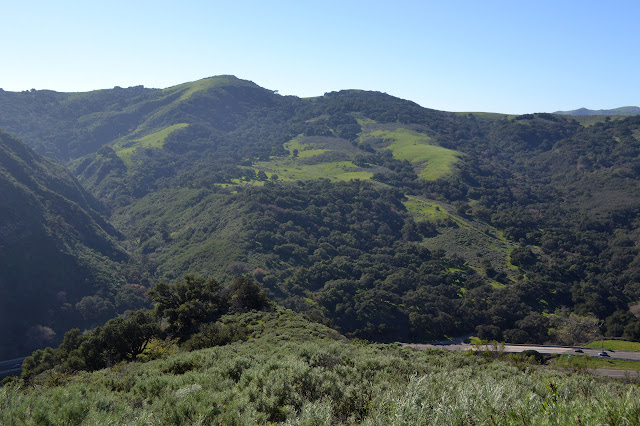 more hills with clusters of oaks in green grass