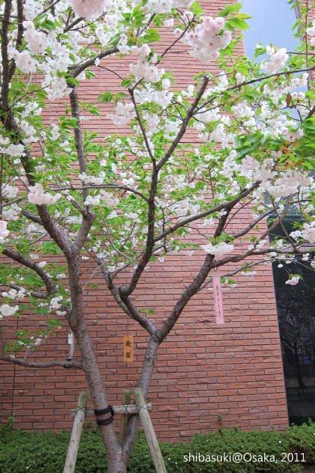 20110415_Osaka-89_大阪造幣局_1_1_1.JPG