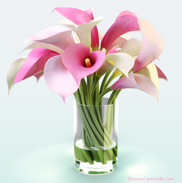 about bouquets of calla lily flower