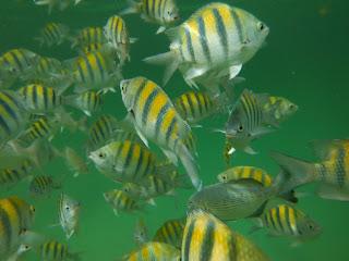 Dans une lagune près de Akumal, on se croirait dans un aquarium grandeur nature