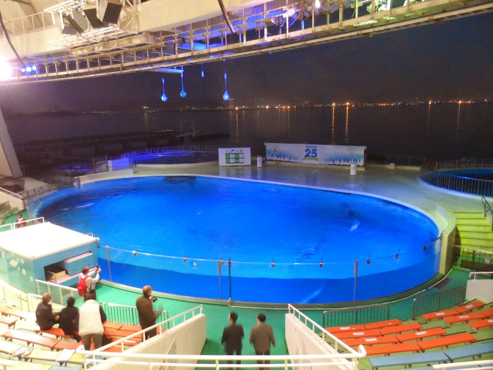 Swimming pool for dolphins