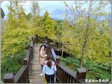銀杏森林(大崙山觀光茶園)