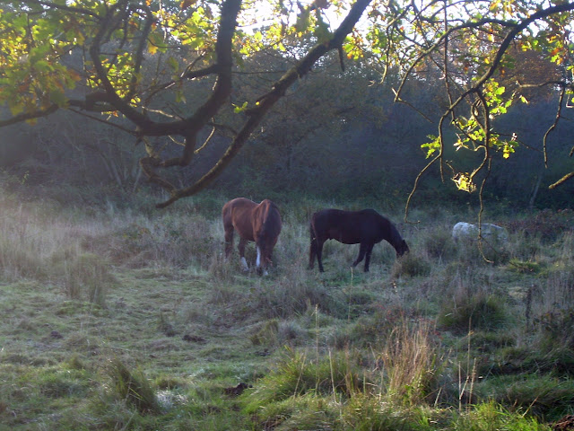 Grazing horses - Castor Hanglands