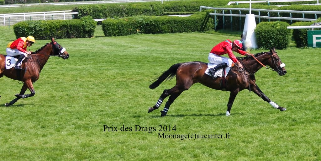 Photos Auteuil 8-06-2014  IMG_1809