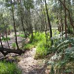 The Gibbergong track on the flats near Bobbin Head (118717)