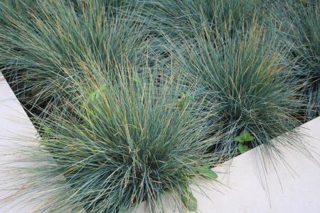 diseño de jardín paisajismo proyecto de jardín bajo mantenimiento césped semillas bajo coste