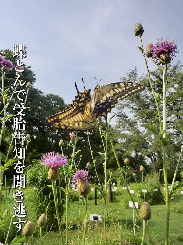 蝶とんで受胎告知を聞き逃す
