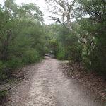 Continuing through the bush (121051)