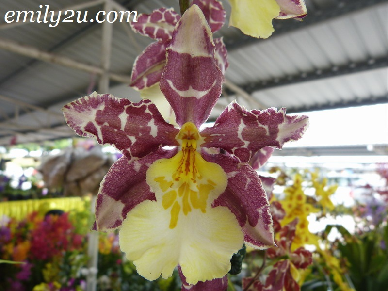 Pameran Dan Promosi Orkid Orchid Exhibition Amp Promotion