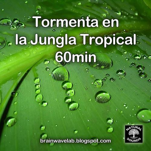 Tormenta en la Jungla Tropical - 60min