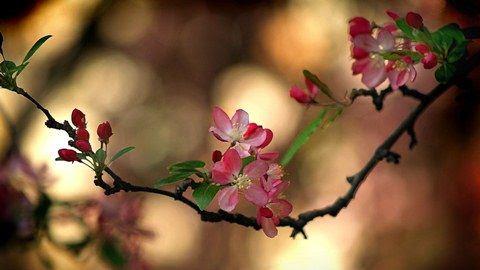 Naturaleza Flores Wallpaper
