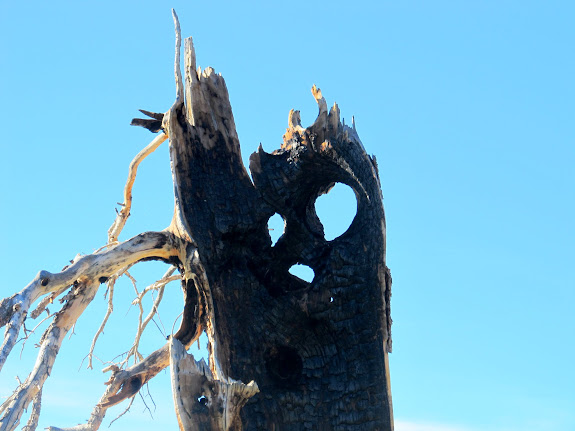 Ghostly burned tree