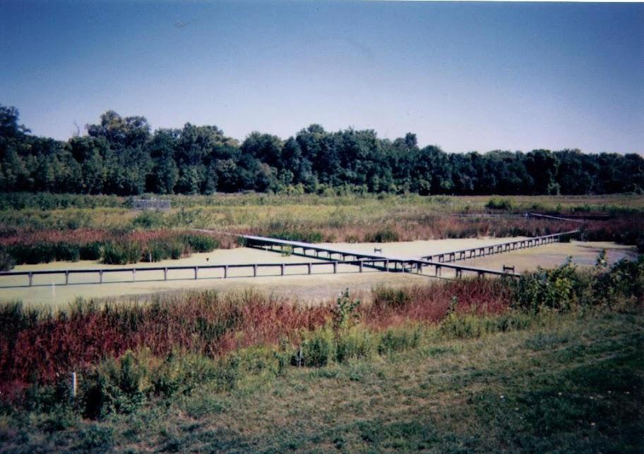 Искусственное болото в кампусе университета в Огайо(США). 1999 год.