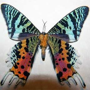 Serangga-Serangga Unik & Mengagumkan di Dunia (1/2)