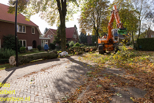 Bomen gekapt Museumlaan in overloon 20-10-2014 (34).jpg