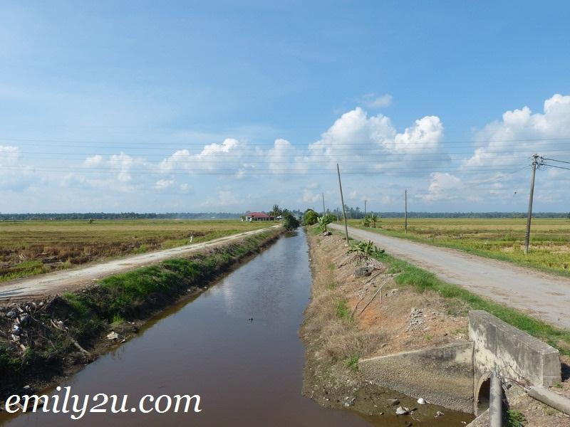 Kampung Sungai Sireh Homestay, Tanjung Karang