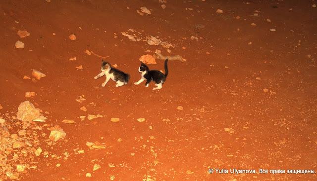 Котята из Дубровника