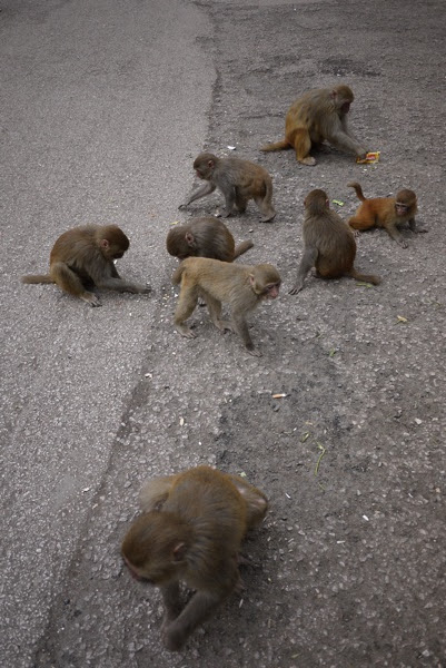 8 monkey kids on the ground