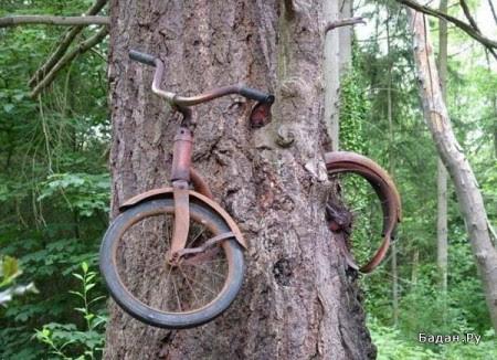 велосипед врос в дерево