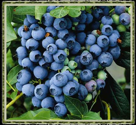 Crumble de frutas vermelhas da Beatriz 5