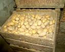 تخزين البطاطس