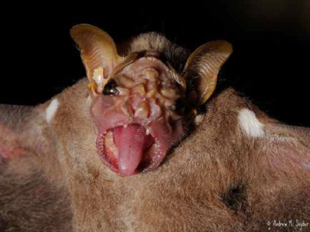Weird And Ugly Bats Nice N Funny
