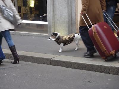 Собака Versace