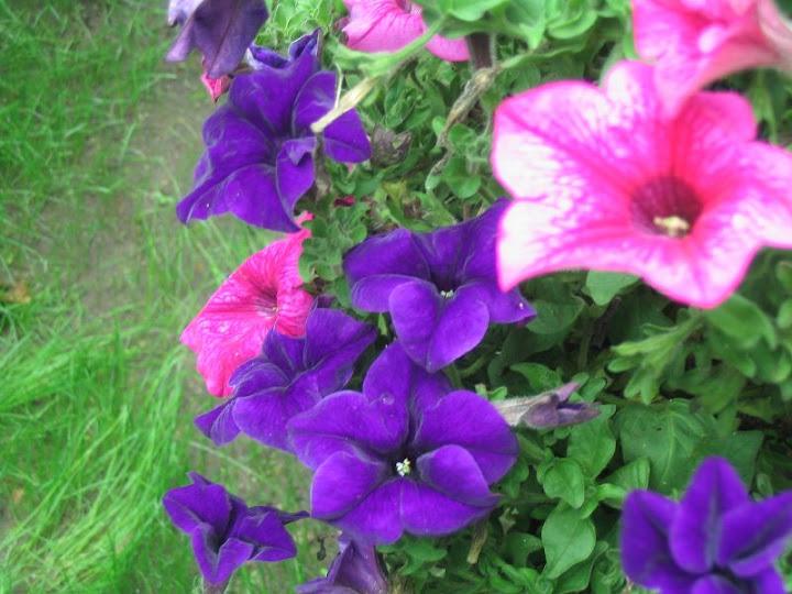 Kiedy Siac Kwiaty Jednoroczne Rosliny Jednoroczne Wysiew Sadzenie E Ogrodnik