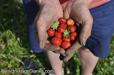French Village Diaries Home grown fruit strawberries orchard