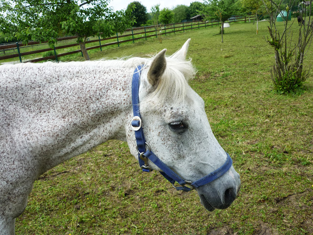 Pferd auf Gut Streiflach