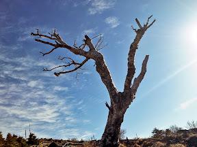 지리산 화대종주-반야봉경유