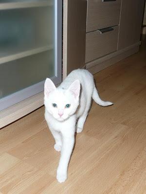Zuri, cachorrita blanca requeteguapa busca papas.Alava. ¡ADOPTADA! Fotos%2B006