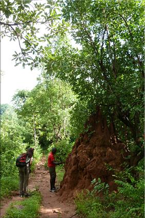 Gran termitero camino a la Cascada de Dindefelo