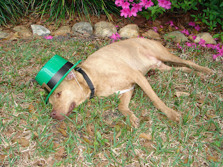 BUDDY, ST. PATRICK'S DAY