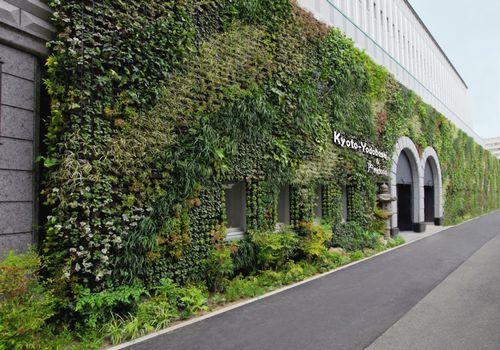 Sophie Le Berre Plantes Du Japon Histoire Botanique Et