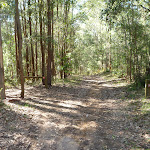 Wide trail south of Kingtree Ridge Fire Road (365483)
