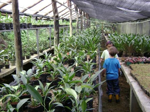 Turismo en nirvana encontraras muchos lugares en donde for Vivero plantas exoticas