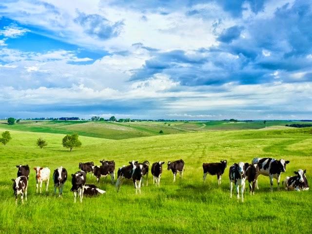 granjas ganaderia extensiva leche ecologica vacas felices