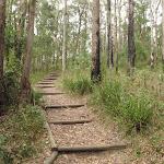 walking track near Katandra Rd Picnic Area (226759)