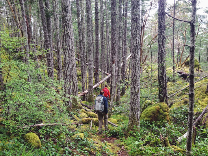 Forest shelters. To Peden Lake and Beyond: A Photoadventure