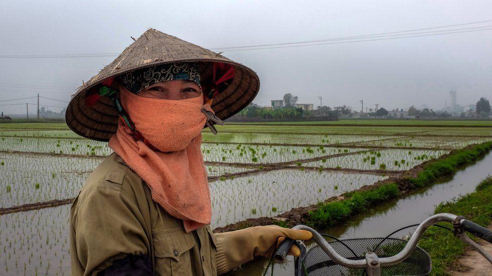 Во время посевного сезона Буи Тхи Суот каждый день встает в четыре утра