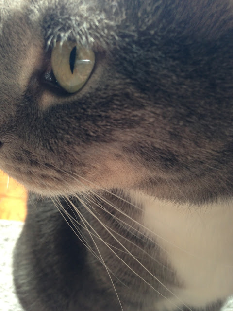 close up kitty face