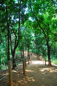 봉제산 숲길