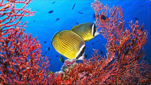 Tropical Fish and Coral.jpg