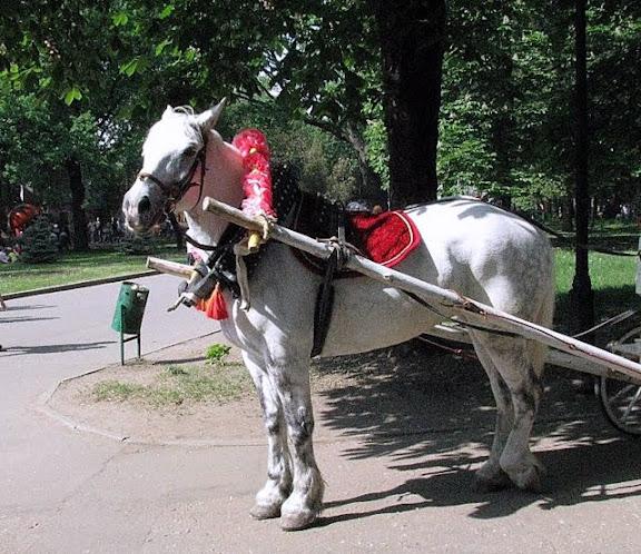 Лошади умеют ждать