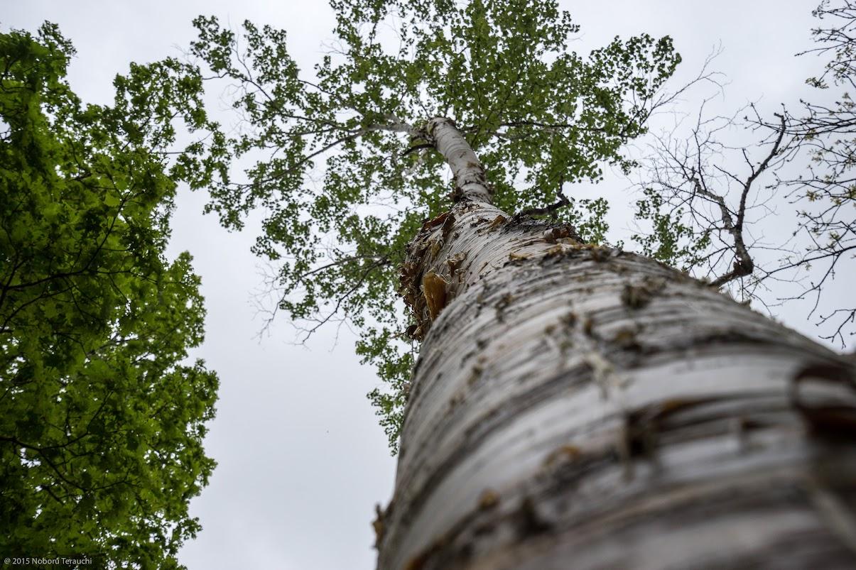 天空へ続く森