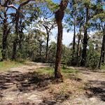 Warriwarri Lookout trail (235760)
