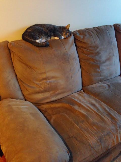 sleepy cat monday