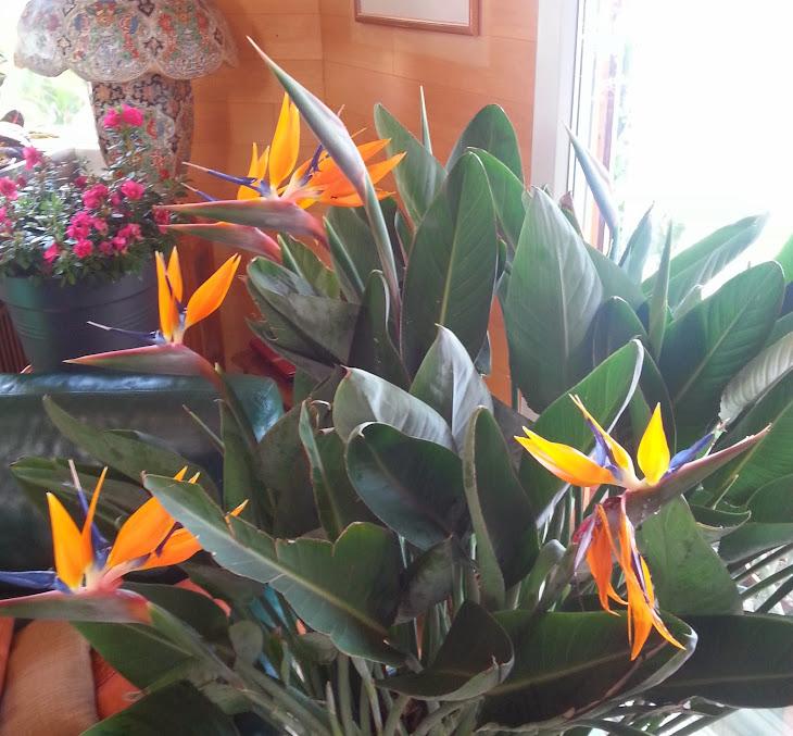floraisons du mois 20140328_121229